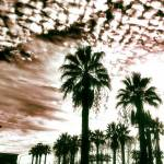 """Altocumulus Clouds over Palm Trees"" by Aesthete"