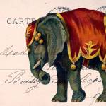 """Elephant Postcard Collage"" by angelandspot"