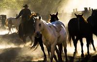 Cowboys and Horses-4419