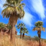 """Fan Palm Oasis"" by charker"