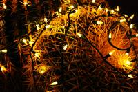 Cactus lit with Stringed lights