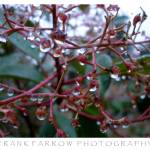 """Rain Droplets Photograph"" by farrow"