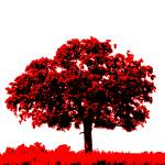 """Lone Oak - Black White And Red Series"" by bettynorthcutt"