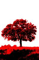 Lone Oak - Black White And Red Series