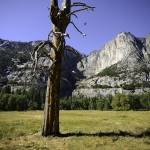 """Yosemite"" by kbrimson"