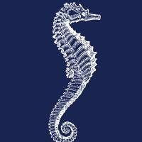 seahorse Art Prints & Posters by Zeppi Prints