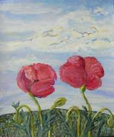poppies in light breeze