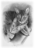 Bengal Cats in Pencil