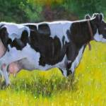 """Holstein Cow in Oil Pastel"" by joyart"