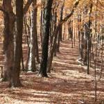 """Hiking Trail"" by photosbycal"