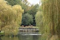 bridge through the willows
