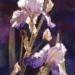 """""""Purple Glory"""" by KimStenbergFineArt"""