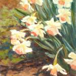 """Pink Trumpet Daffodils"" by KimStenbergFineArt"