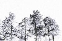 Black and White Trees on Oil
