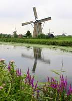 Windmills of Kinderdijk with Flowers