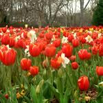 """""""Spring Garden P1130372"""" by rayjacque"""