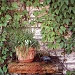 """""""Secret Garden"""" by Lilykins"""