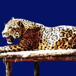 Jaguar God Of The Night