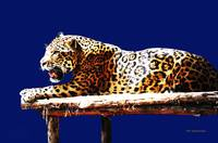 Jaguar God Of The Night