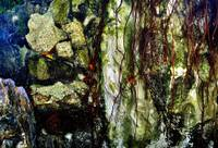 ROOTS & ROCKS, V3:  ABSTRACT PHOTOGRAPHY