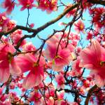 """THE HEART OF SPRING****SWEET MAGNOLIA!"" by marciajean"