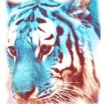 """Siberian Tiger"" by frankreggio"