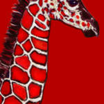 """baby giraffe in red,white and black"" by pietrastone"