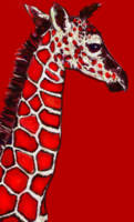 baby giraffe in red,white and black