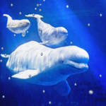 """three belugas"" by pietrastone"