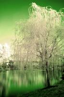Green Infrared Trees And Lake