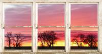 Colorful Tree Horizon White Barn Picture Window