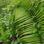 """jungle"" by erinlanzendorfer"