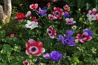 Forest Fling Anemone Style