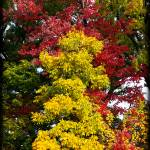 """Michigan Fall (9911)"" by Fotofrieze"