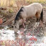 """Horse Drink"" by BrianAShaw"