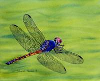 Dragonfly on Green