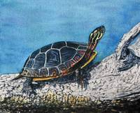 Painted Turtle IV
