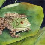 """Frog on Lily Pad"" by PaintedPathWatercolors"