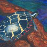 """Painted Turtle II"" by PaintedPathWatercolors"