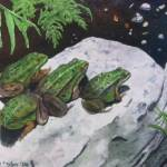"""""""Frogs"""" by PaintedPathWatercolors"""