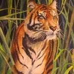 """Tiger"" by PaintedPathWatercolors"