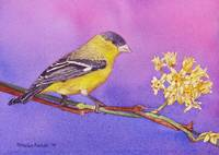 Goldfinch with Flower