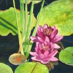 """Lily Pads"" by PaintedPathWatercolors"