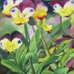 """Pansies"" by PaintedPathWatercolors"
