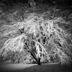 """""""Heavy Snow (0079)"""" by Fotofrieze"""