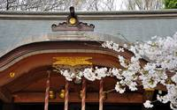 Temple of My Wife's Faith, with Sakura