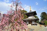 Pagoda and Flowers