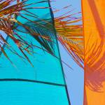 """Sails And Palm Frond"" by ChrisMarshall"