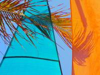 Sails And Palm Frond