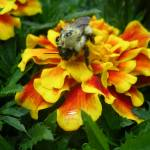 """Pollenating"" by VTDarkStar"